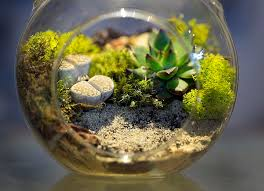 best indoor plants for office. Terrariums Are A Good Way To Bring Plants Into The Office Because They Contained In Glass. This Of Displaying Not Only Adds Interesting Best Indoor For H