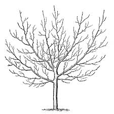 Small Picture 234 best Trees etc images on Pinterest Drawings Drawing and Fall