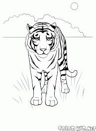Disegni Da Colorare Animali Selvatici