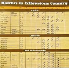 Ynp Hatch Chart Planettrout