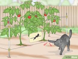 4 ways to keep cats out of a garden