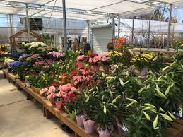 the flower boutique nursery zainos nursery garden center
