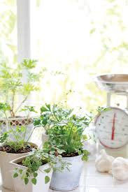 Small Picture Garden Design Garden Design with Growing Herbs Indoors on