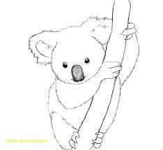 fascinating koala coloring pages full of koalas with australian ribsvigyapan