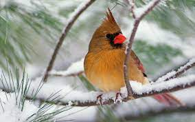 Free Winter Birds Wallpaper