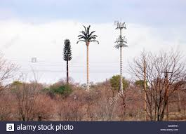 Image result for mobile phone mast disguised as tree