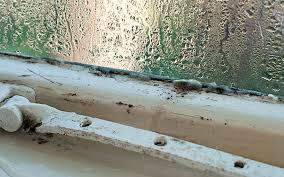 Condensation And Mould On Window