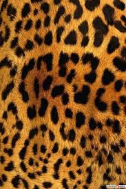 animal print desktop wallpaper. Animal Print HD Wallpapers Throughout Desktop Wallpaper
