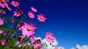 Résultats de recherche d'images pour «flowers»