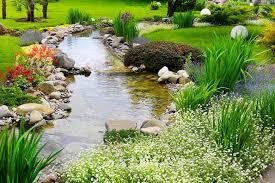 marginal aquatic plants for 2 inches 5