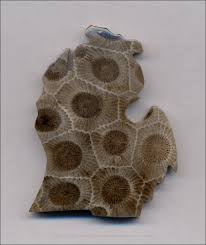 Image result for petoskey stone