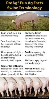 best images about ag in the classroom cattle 17 best images about ag in the classroom cattle pigs and agriculture