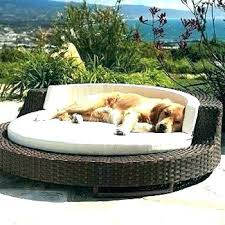 Related Post Outdoor Dog Bed With Canopy Elevated Beds The Best ...