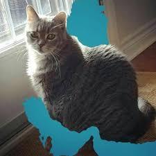 نتیجه تصویری برای نقش ایران گربه کودکانه