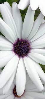 Iphone X Wallpaper White Flower ...