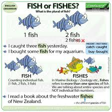 The Plural Of Fish Fish Or Fishes Woodward English