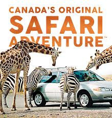 Family Travel Guide, African Lion Safari