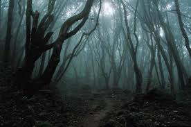 Αποτέλεσμα εικόνας για δάσος