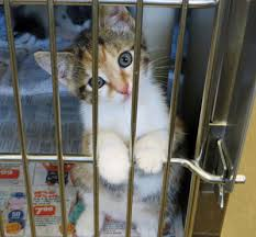 animal shelter kittens. Unique Shelter The Burlington County Animal Shelter Is In Dire Need Of Fosters For Kittens  And Adult Cats Can You Or Someone Know Help Us By Fostering Until  Throughout Kittens