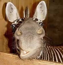 Image result for goofy animals