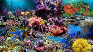 colorful coral reef wallpaper. Wallpapers For Coral Reef Wallpaper With Colorful Pinterest