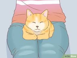 how to put nail caps on your cat 10