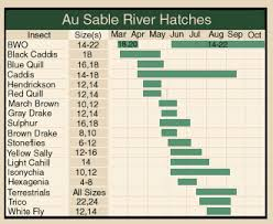 Hendrickson Hatch And Dry Fly Fishing Has Started On The Au