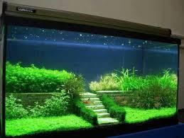 fish tank lighting ideas. Fish Tank Ideas Freshwater Lighting C