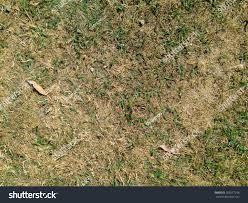 grass field texture. Dry Summer Grass Field Texture H