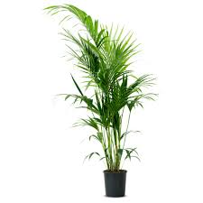 decorative plants for office. Captivating Decorative Indoor Planter Ideas With White Color And House Plants Dreaming Aloud Pot Plant Black Office For O