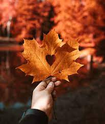 autumn leaf HD wallpapers, backgrounds