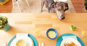 Did You Feed The Dog Chart Tips For Giving Dogs Table Food