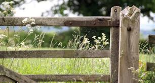 natural fencing ideas