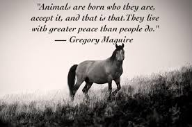 Beautiful Animal Quotes Best of 24 Quotes About Animals That Will Make You A Better Human