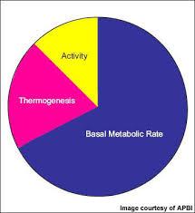 Childhood Obesity Pie Chart Tesofensine Anti Obesity Medication Clinical Trials Arena