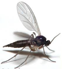 Small Flies In Kitchen The Pest Flies Invading Your Home Proof Pest Control
