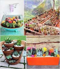 they need almost no care and you can see them growing everyday and enjoy the views for that you can grow an indoor or outdoor cactus garden thinking how