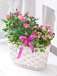 happy birthday pink and green happy birthday pink rose kalanchoe basket