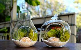 Finest Collection Of Terrariums Ideas 7.