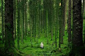 Scenery 26 best free scenery forest green and fog photos on