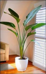 Appealing Indoor Plants With Ceramic Flower Pot Modern Of ..