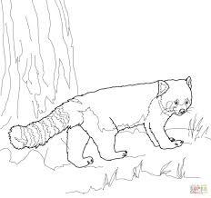 Coloriage Panda Roux Coloriages Imprimer Gratuits Dessins A Imprimer Bebe Panda A Colorier Voir Le Dessin Voir Le Dessin Voir Le Dessin L