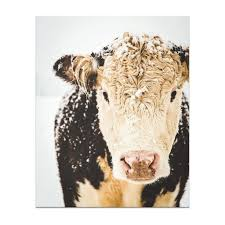 cow print cow art french country decor farmhouse print regarding french country wall art prints