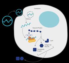 mRNA - Precision NanoSystems