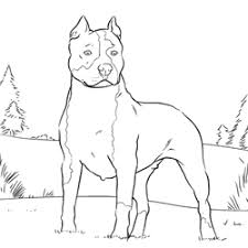 American Pit Bull Terrier Coloring Page Stempel Honden
