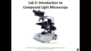 Using A Good Compound Light Microscope Micro Lab 3 Introduction To Compound Light Microscopy
