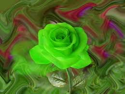 Image result for images of green rose hd
