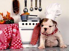 baby english bulldog wallpaper. Contemporary Wallpaper Wallpapers In Baby English Bulldog Wallpaper U