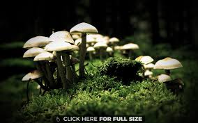 2592x1944 file infected mushroom live jpg