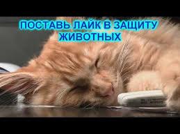 """Картинки по запросу фото котов """"поставь лайк"""""""